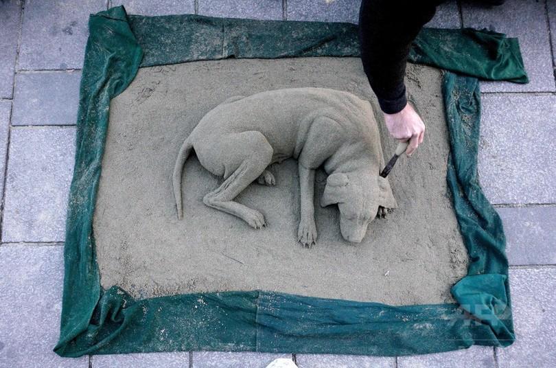 スヤスヤお昼寝、砂でできたワンちゃん オーストリア