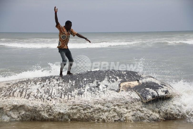 ガーナ海岸にクジラ死骸漂着、1週間で5頭
