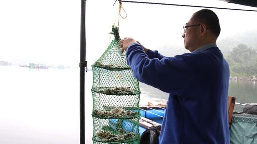 動画:日本との競争に敗れ衰退、「東洋の真珠」復活を目指す香港