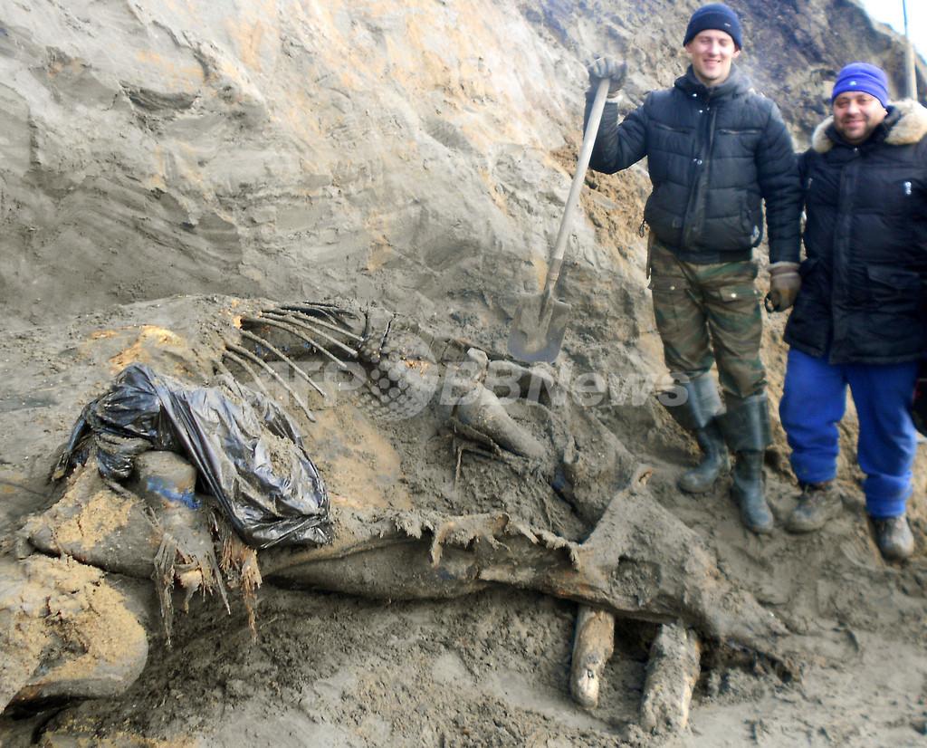 ロシア北部の11歳少年、「世紀のマンモス」を発見