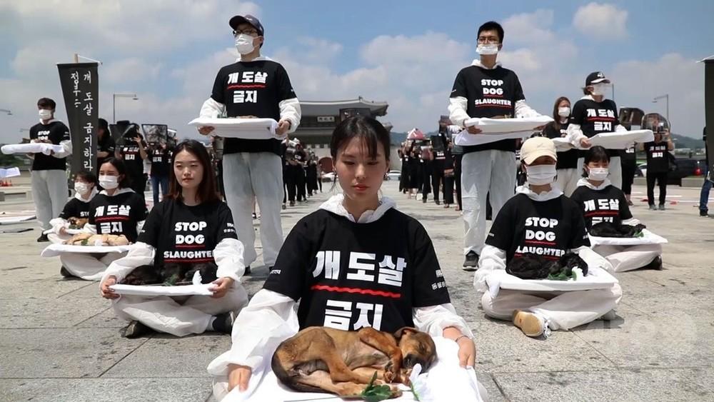 動画:犬の死骸掲げて犬肉売買に抗議 韓国の動物愛護団体