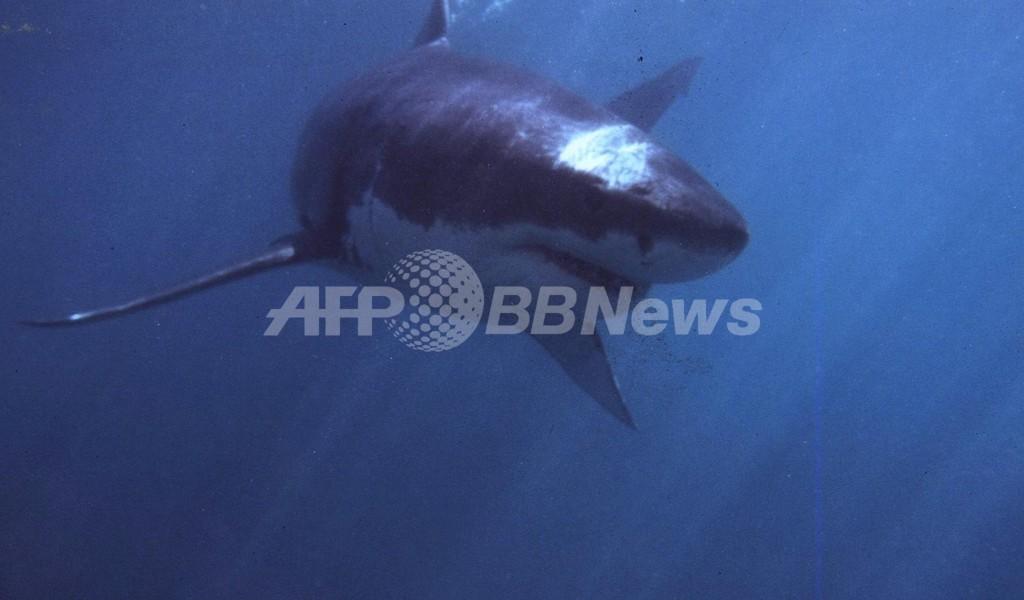 巨大ザメと恐怖の格闘、オーストラリアのカヤック乗りが告白