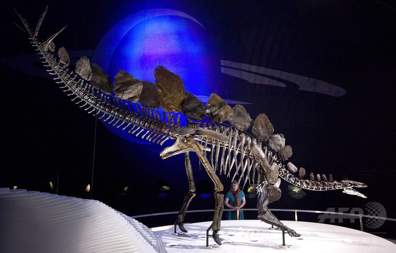 ステゴサウルスの背板の形、雌雄で違った可能性 研究