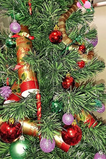 クリスマスツリーの飾りにまぎれて猛毒ヘビ、豪民家で発見