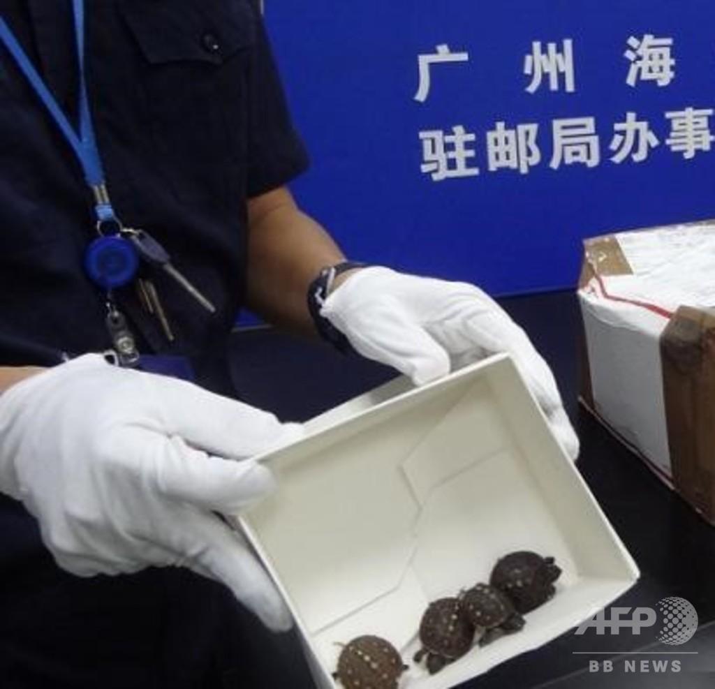 スナック菓子の容器に75匹の生きた子ガメが 広州税関が摘発
