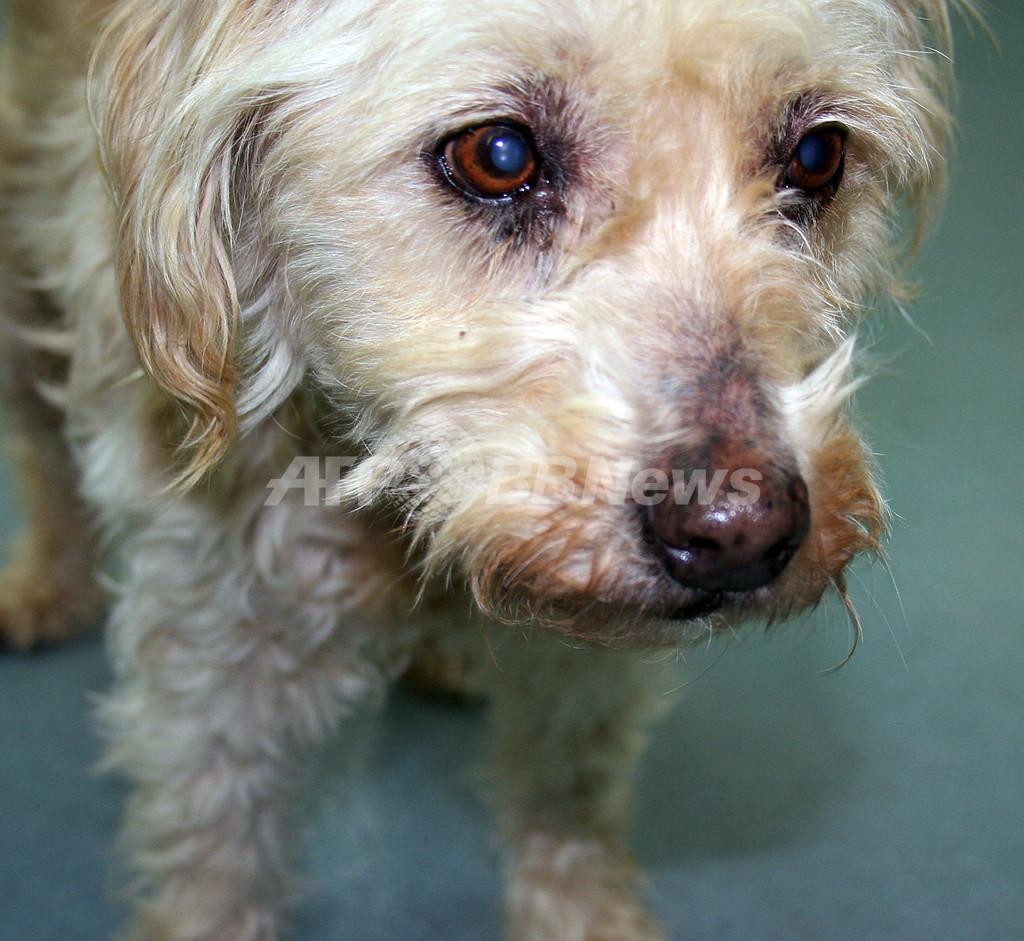 9年間行方不明の犬が飼い主と感動の再会へ