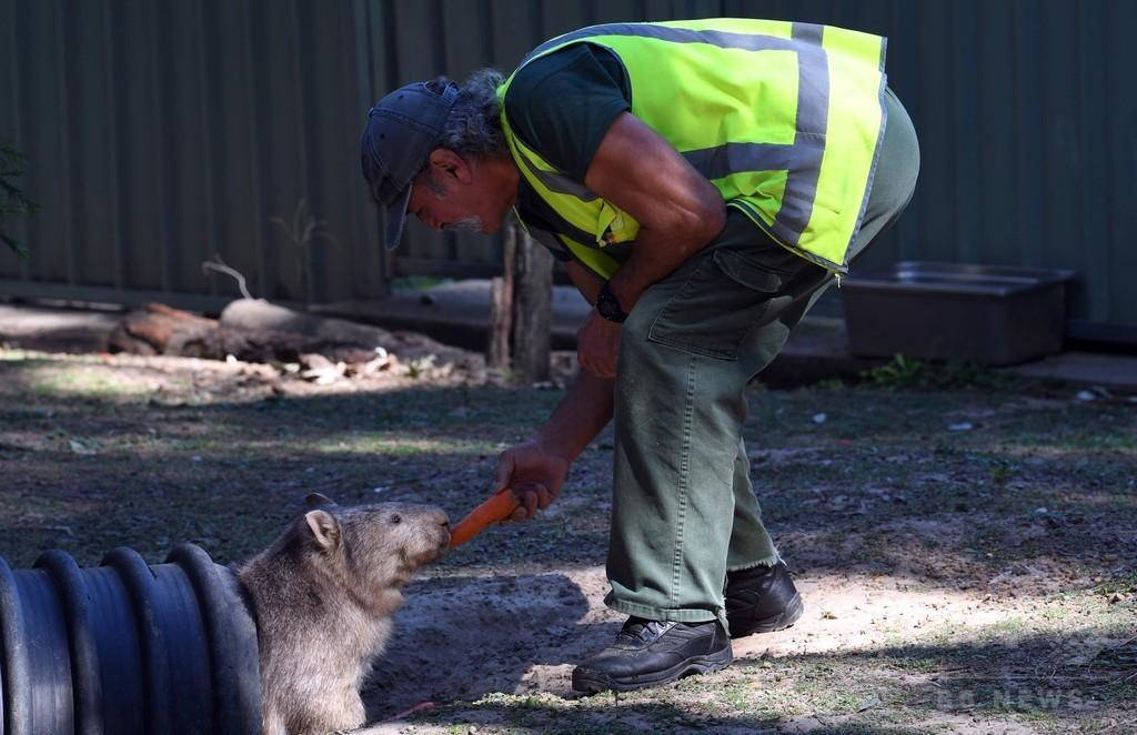 受刑者と野生動物が一緒にリハビリ オーストラリア