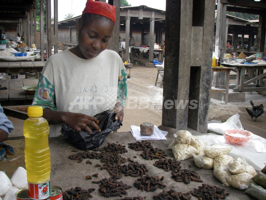 食生活の主役はイモ虫、中央アフリカ
