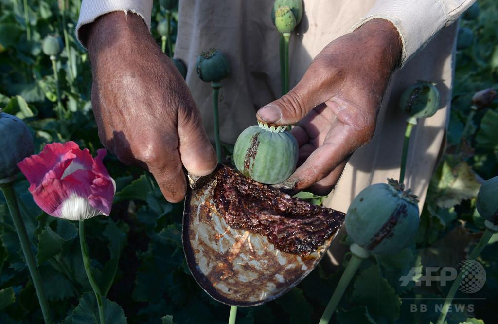 ケシからヘロインへ、タリバンが麻薬の生産に進出 アフガニスタン