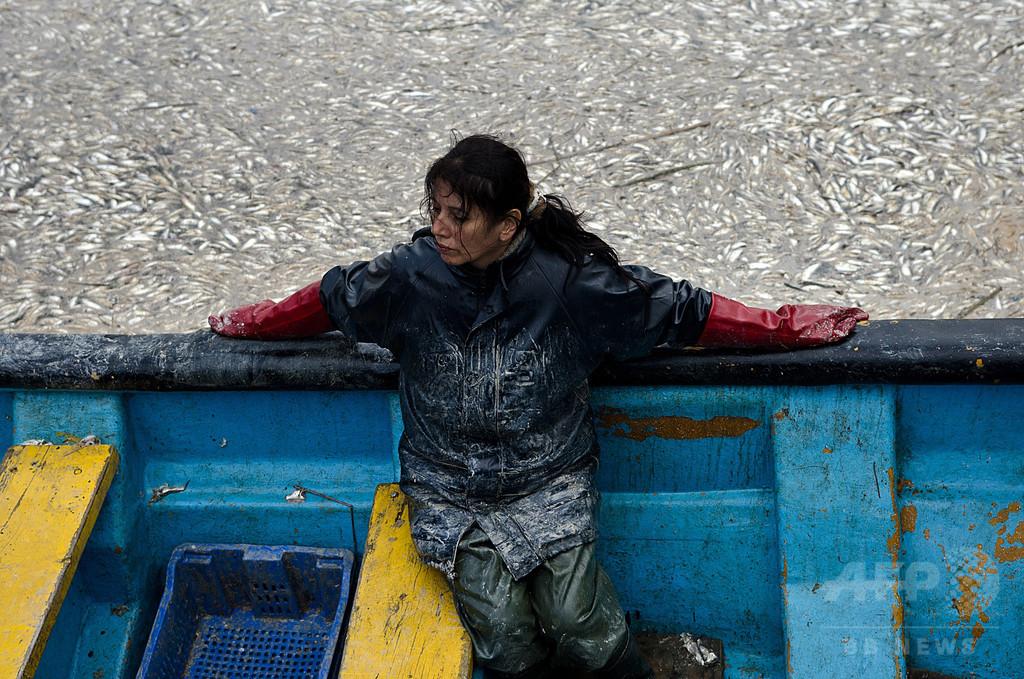 チリで続く海洋生物の大量死、原因はエルニーニョなのか