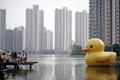 「黄色いアヒル」、中国ブログで検索禁止に