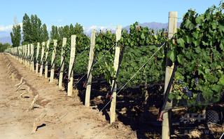 ワイン生産に最も過酷な場所、世界5位に長野県 調査
