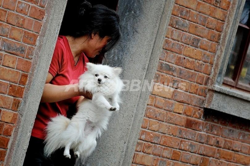 ペットブームの上海、イヌにも「一人っ子政策」導入を検討