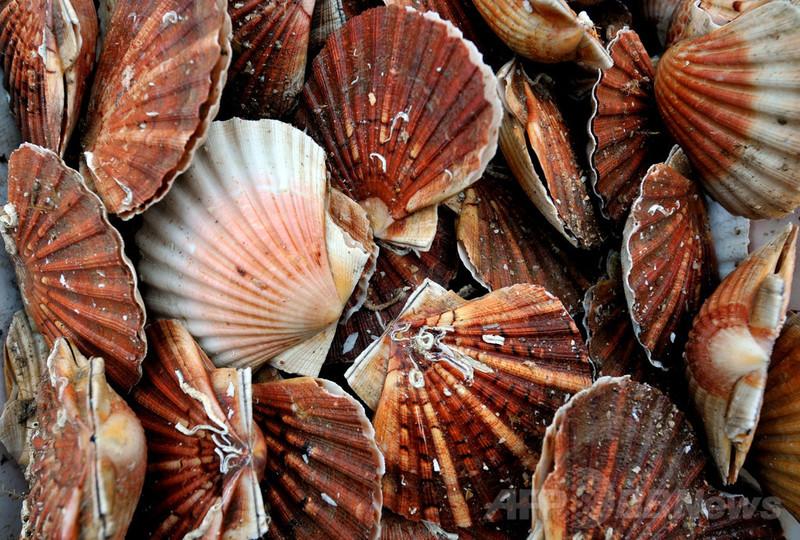 衝撃に200倍強いガラス開発、軟体動物の殻に着想 カナダ研究