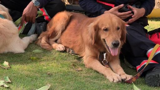 動画:生存者捜索で救助犬投入、地震で損壊のスラウェシ島ホテル