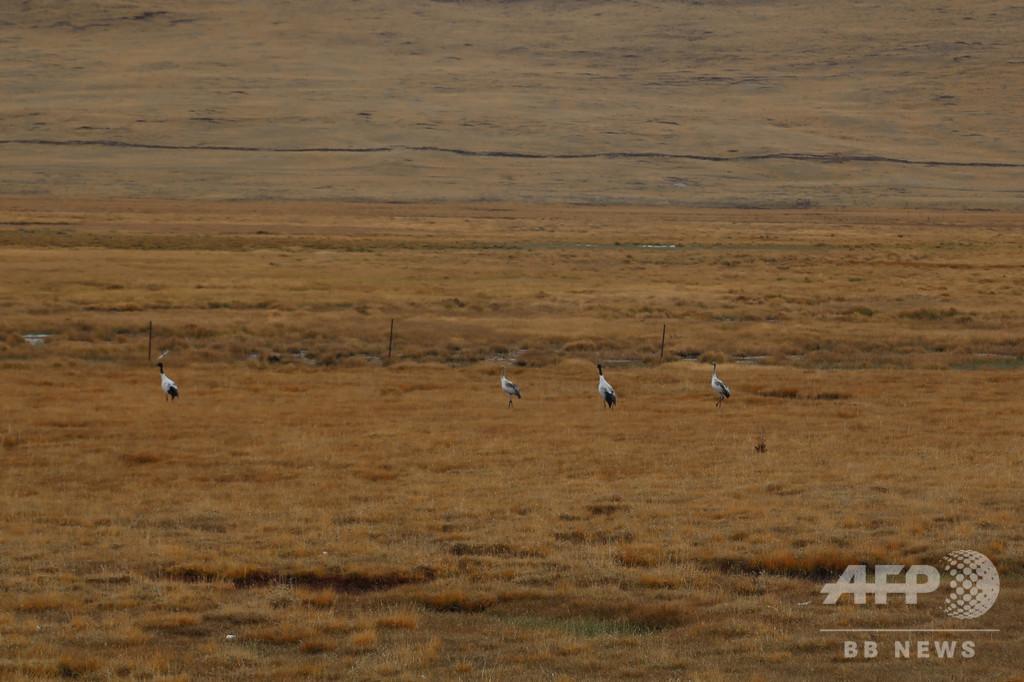 中国・青海湖の水鳥、1年で12万羽以上増加 国内最大の内陸湖