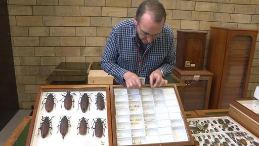 動画:新種の甲虫、グレタさんにちなみ命名 英自然史博物館
