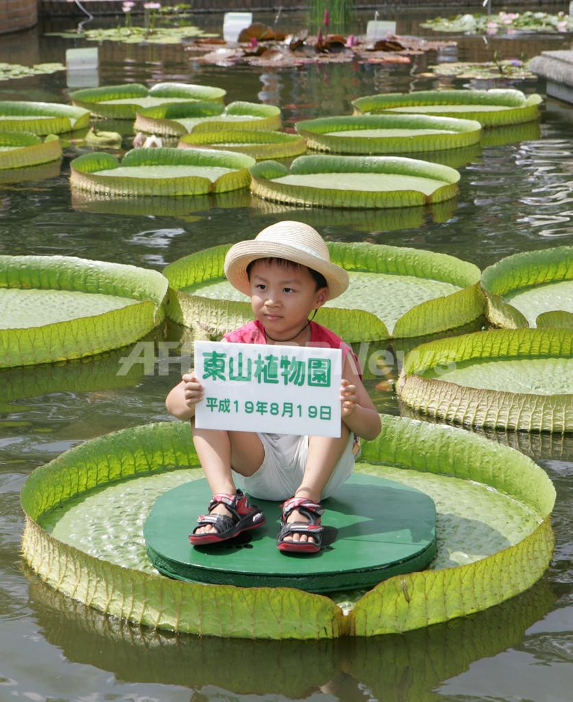 東山植物園 水に浮く葉に乗る体験イベント開催