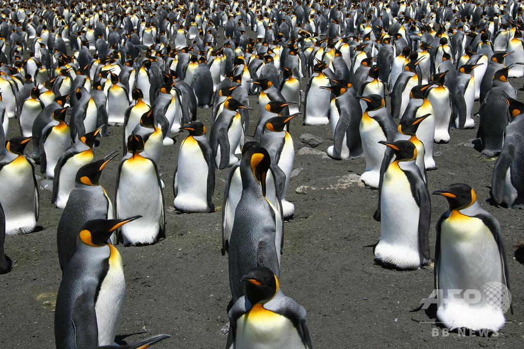 ペンギンのふんから大量の笑気ガス 研究者に異変も