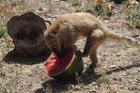 熱波のイタリア、凍った果物などで涼む動物たち