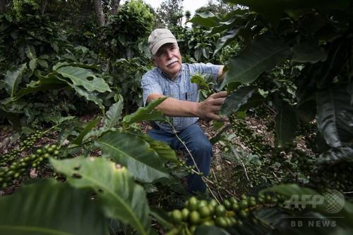 中米のコーヒー農園、気候変動の影響に悪戦苦闘