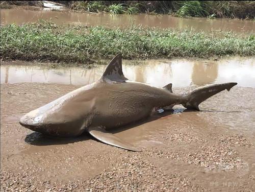 豪北東部の洪水、予期せぬ場所にヘビやワニ、サメの可能性