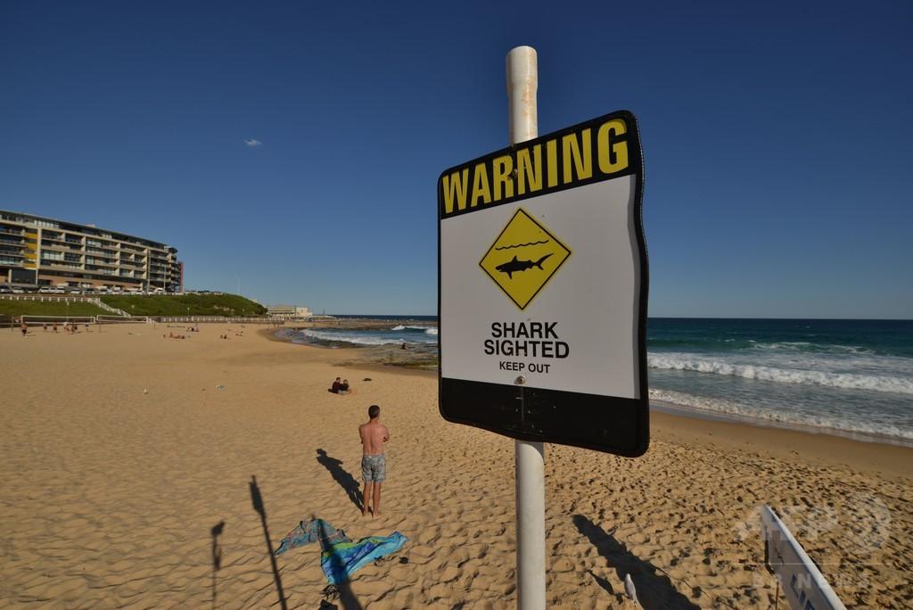世界のサメ襲撃事故、2015年は過去最多 温暖化の影響か