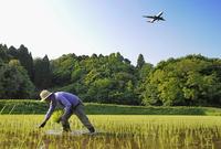 日本の農業人口、20年間で半減 高齢化進む