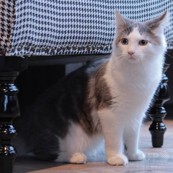 おしゃれすぎる猫カフェ「MoCHA」新店舗、渋谷にオープン