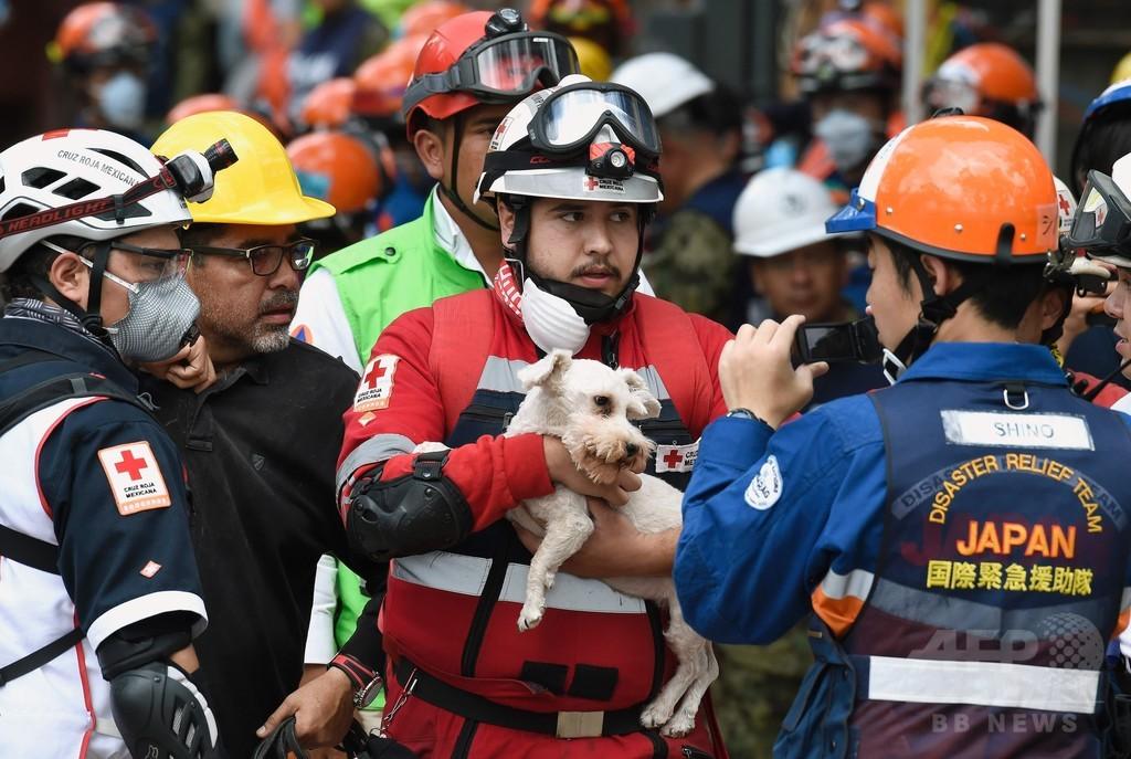 メキシコ地震、日本の救助隊が犬を救出 発生から5日ぶり