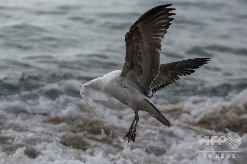海洋プラごみ問題、コカ・コーラなど大手企業が削減協力を表明