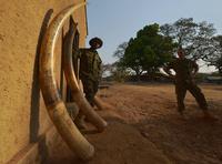 武装集団の密猟に立ち向かうレンジャー部隊、コンゴの国立公園