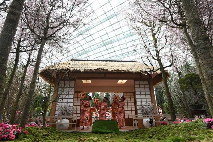 シンガポールで「桜祭り」、日本人会が伝統の踊り