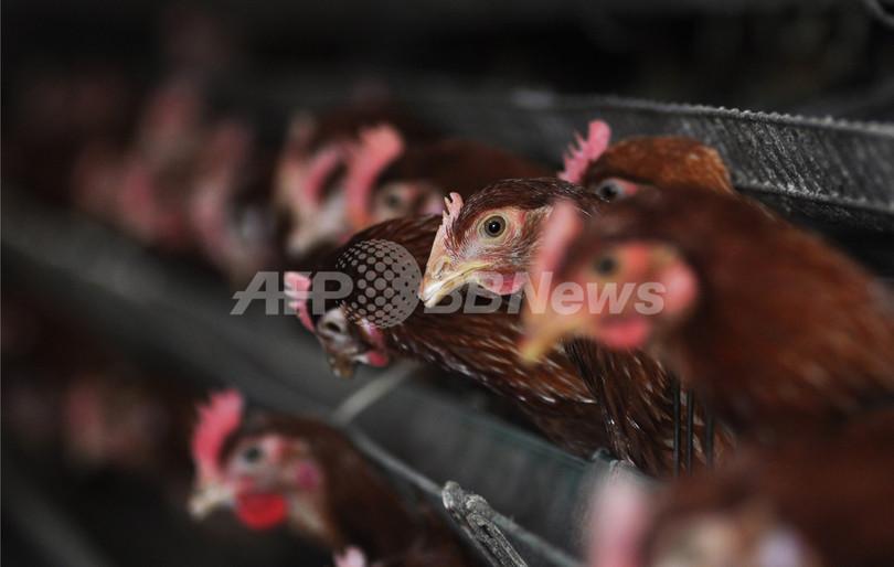 「鳥肉食べ家禽産業の復興を」、中国国営紙が呼び掛け