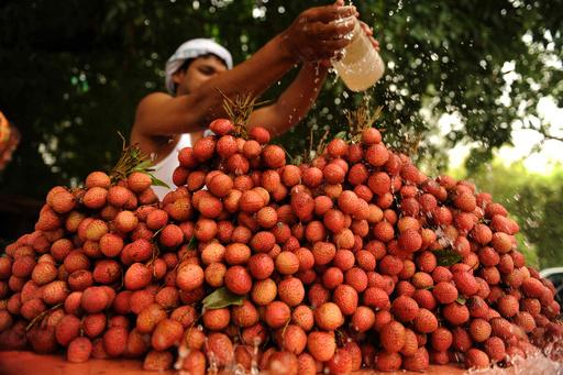 ライチ果実の毒素で脳炎発症か、子ども31人死亡 インド