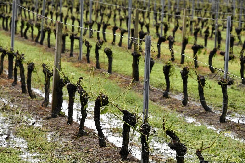 仏ボルドーに「前例のない」嵐、小石大のひょうがブドウ畑を直撃