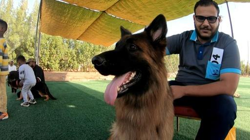 動画:ジャーマンシェパードにグレーハウンド、純血種の犬のビューティーコンテスト スーダン