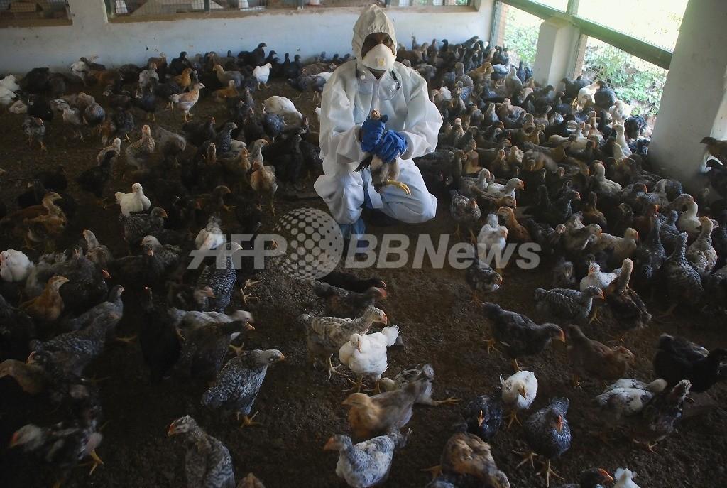 ヒト感染する鳥インフル変異株の論文、WHOが全文公開を勧告