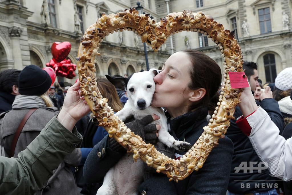 「愛情」…犬が特別な理由を科学的に検証する
