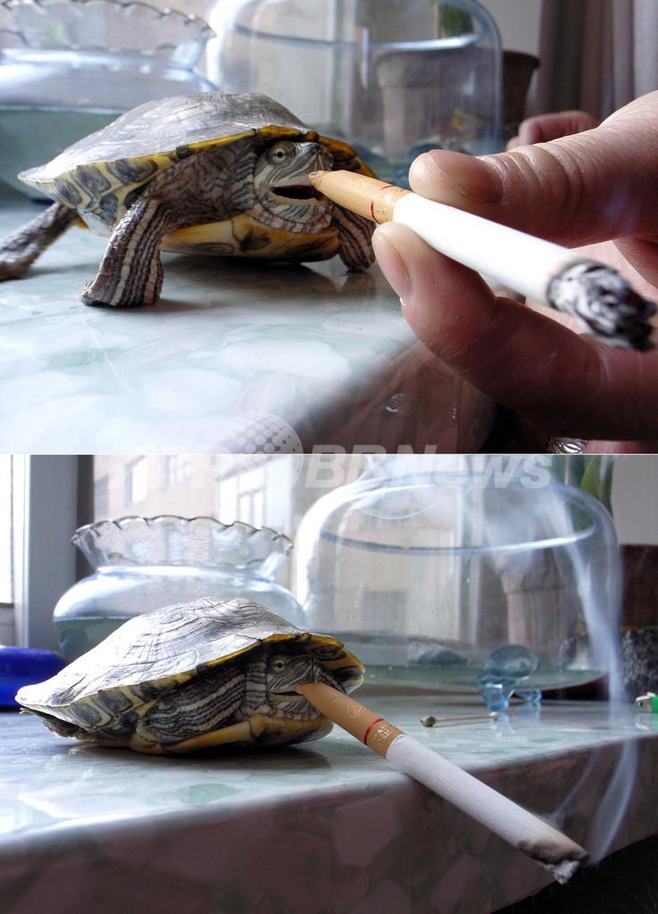 中国でたばこを吸うカメが見つかる