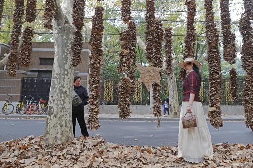 掃除はしません! 落ち葉のある景観づくり 中国・上海市
