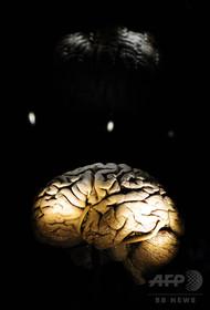 脳が大きい哺乳動物、絶滅リスクより高い 研究
