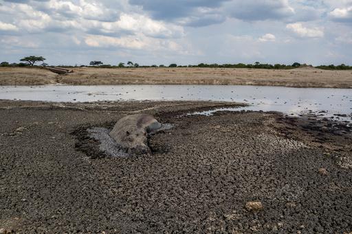 干ばつで水を求め人里へ…野生動物による襲撃増加 ジンバブエ