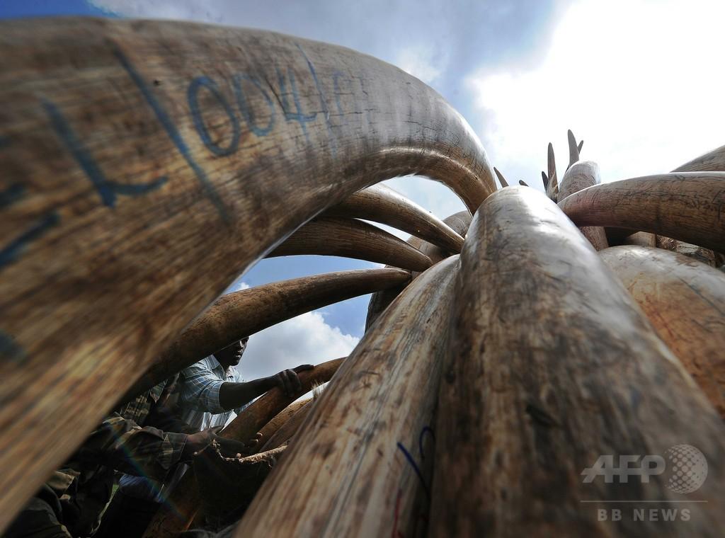 アフリカゾウ象牙製品の商取引、米国でほぼ全面禁止に