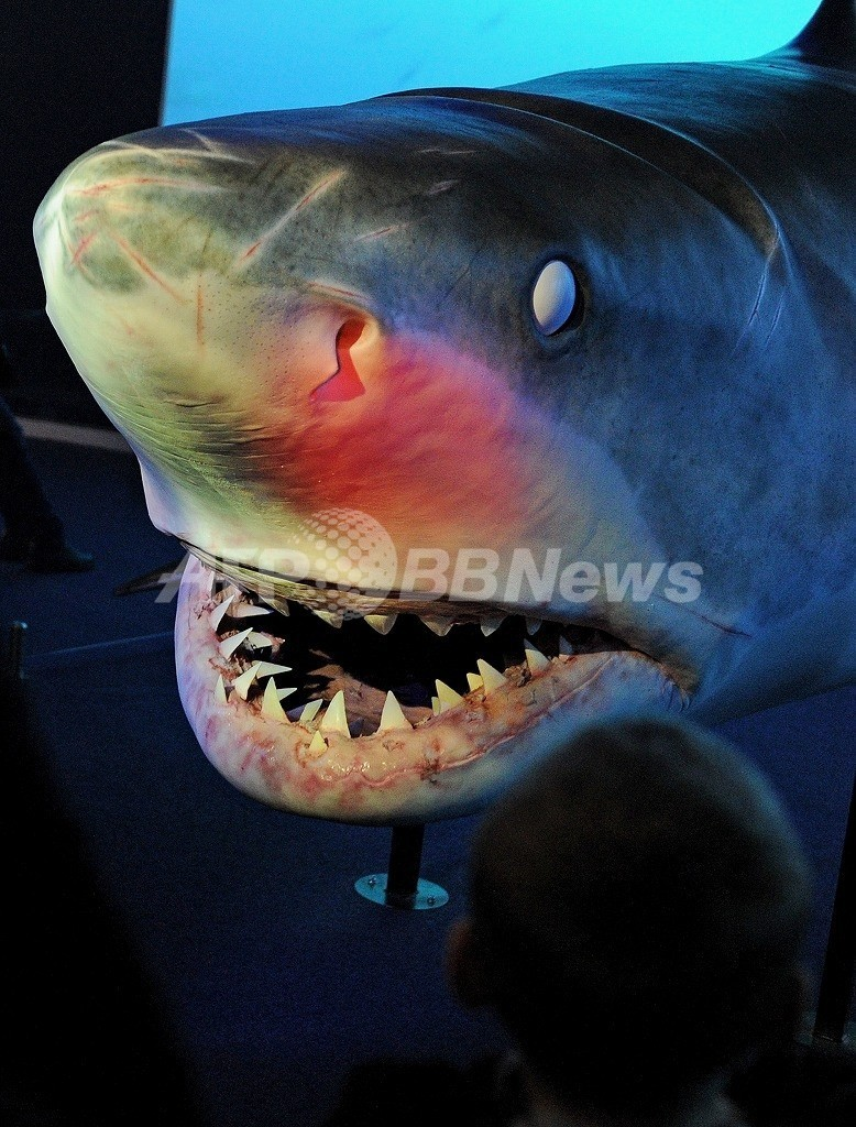 まるで『ジョーズ』のよう、サーファーがサメに襲われる 豪州