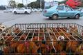 昆明の街角に並ぶ春節の風物詩「年越し鶏」