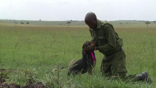 動画:密猟者を追い詰めるマラ・トライアングルの追跡犬部隊、ケニア