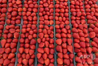 豪スーパーで縫い針混入のイチゴの発見相次ぐ、情報提供に懸賞金800万円