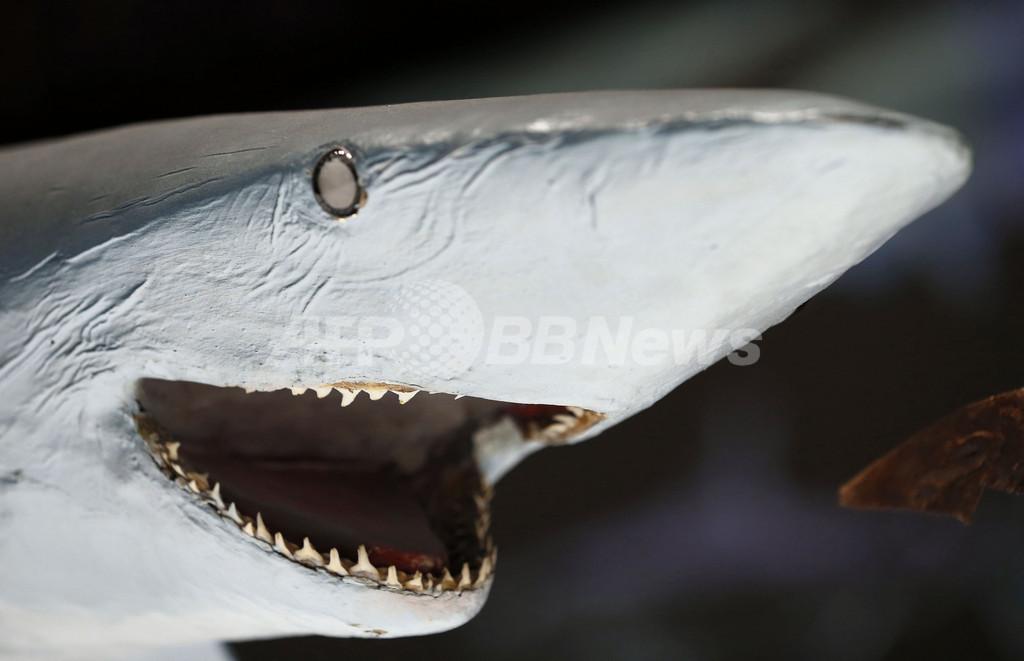 モナコでサメ展、世界海洋デーに開幕