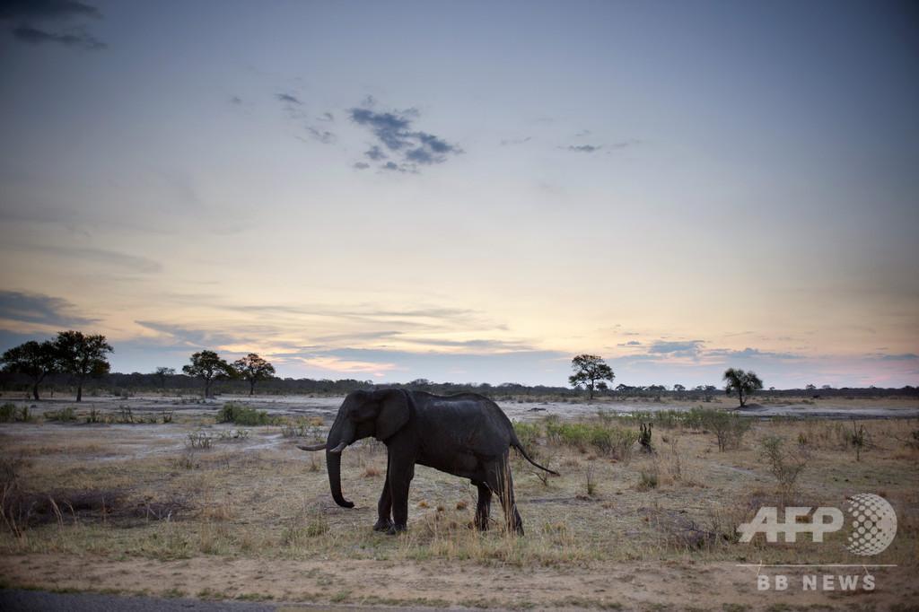 ジンバブエ、国立公園での採掘禁止 中国企業の許可取り消し